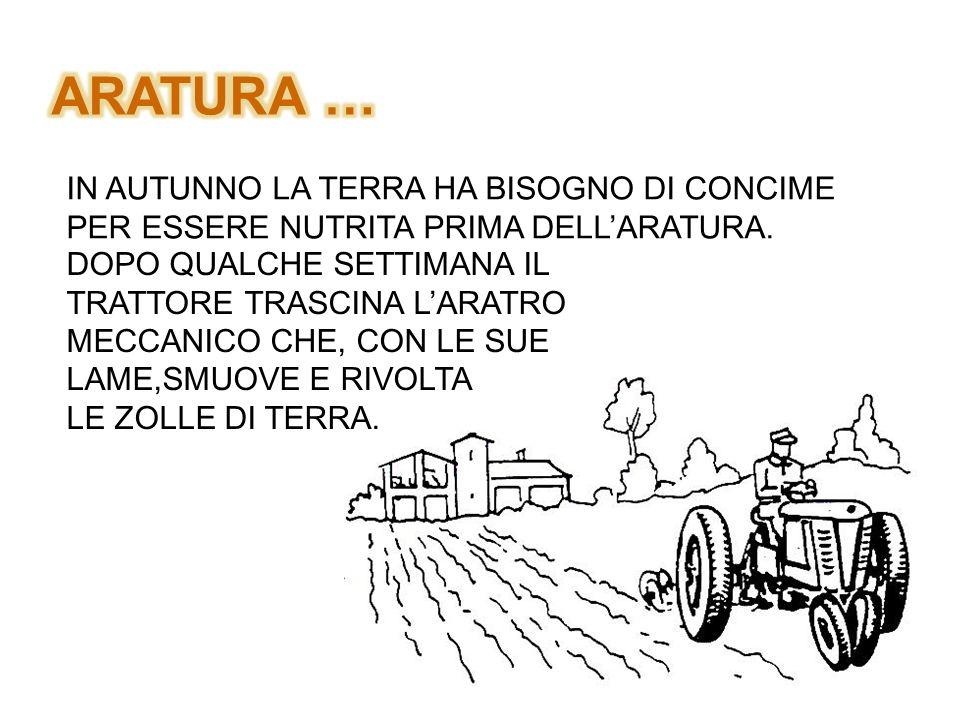 ARATURA … IN AUTUNNO LA TERRA HA BISOGNO DI CONCIME PER ESSERE NUTRITA PRIMA DELL'ARATURA.