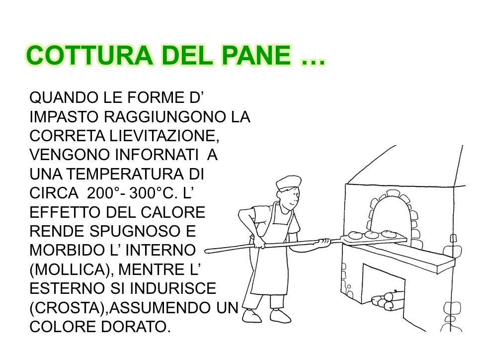 COTTURA DEL PANE …