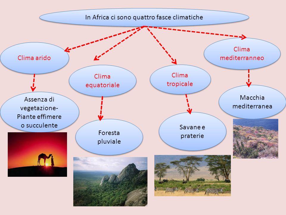 In Africa ci sono quattro fasce climatiche