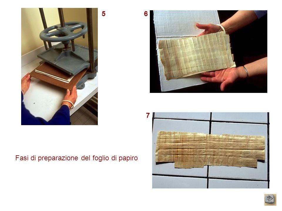 Fasi di preparazione del foglio di papiro