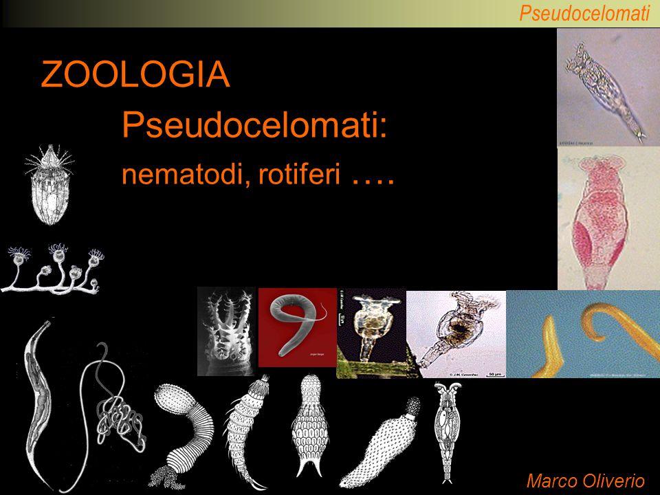 Pseudocelomati: nematodi, rotiferi ….