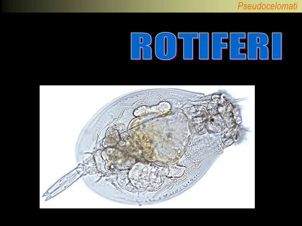 ROTIFERI