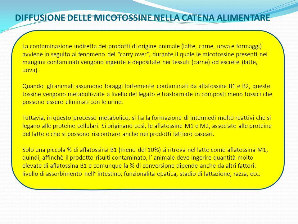 DIFFUSIONE DELLE MICOTOSSINE NELLA CATENA ALIMENTARE