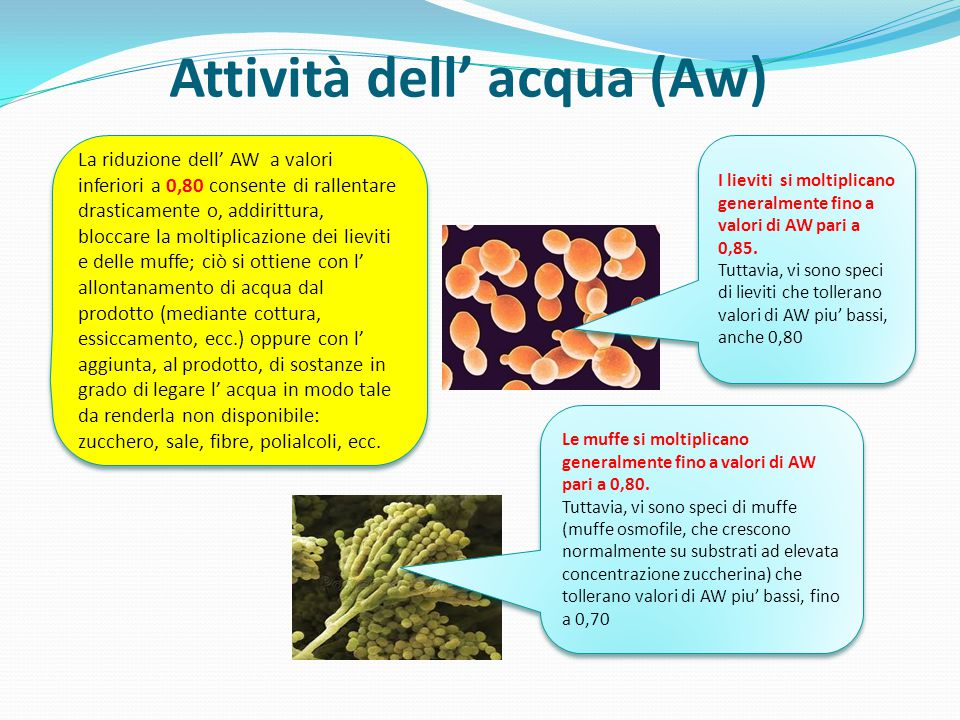 Attività dell' acqua (Aw)