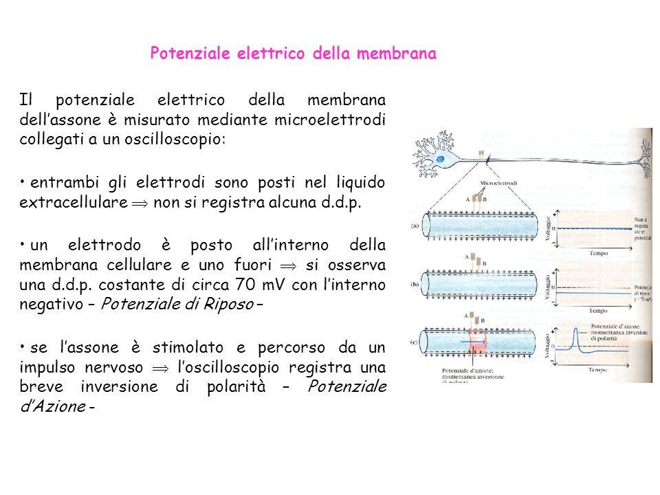Potenziale elettrico della membrana