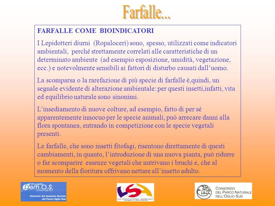 Farfalle... FARFALLE COME BIOINDICATORI