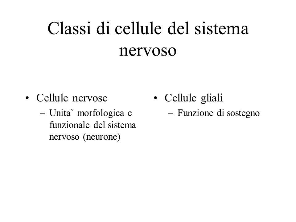 Classi di cellule del sistema nervoso