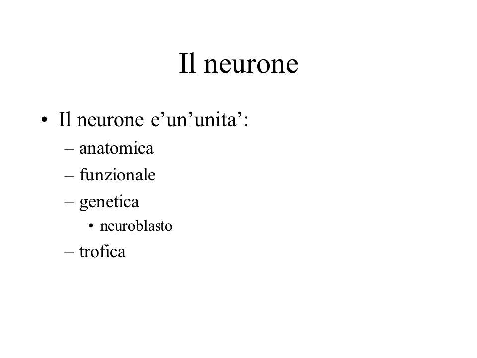 Il neurone Il neurone e'un'unita': anatomica funzionale genetica