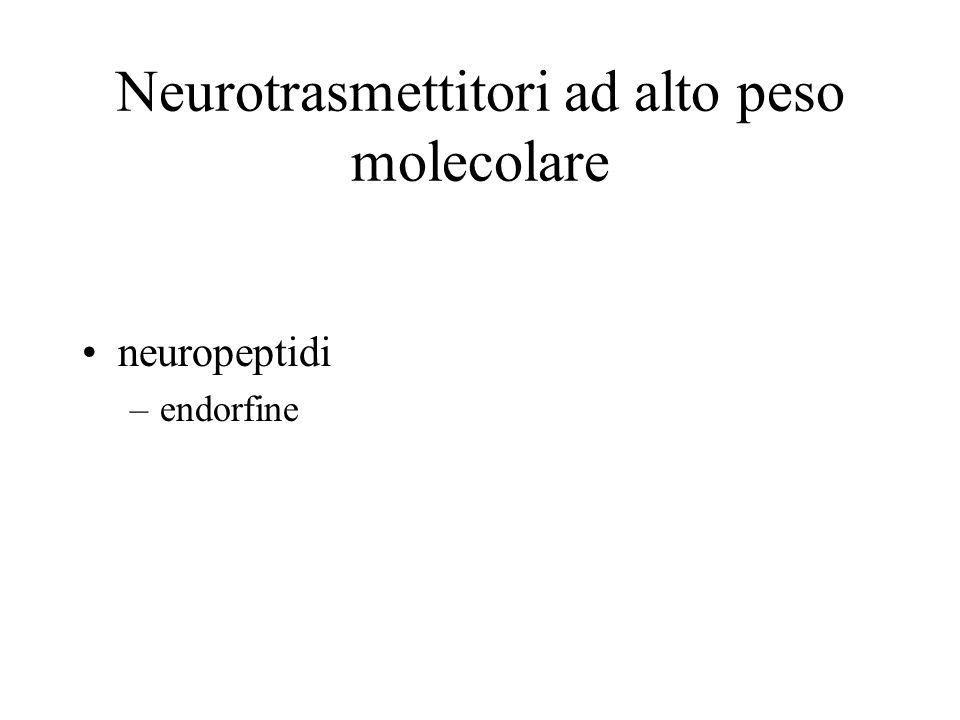 Neurotrasmettitori ad alto peso molecolare