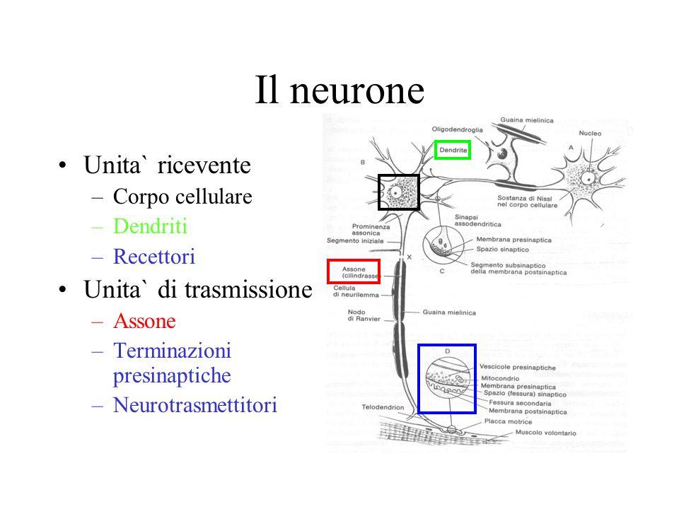 Il neurone Unita` ricevente Unita` di trasmissione Corpo cellulare