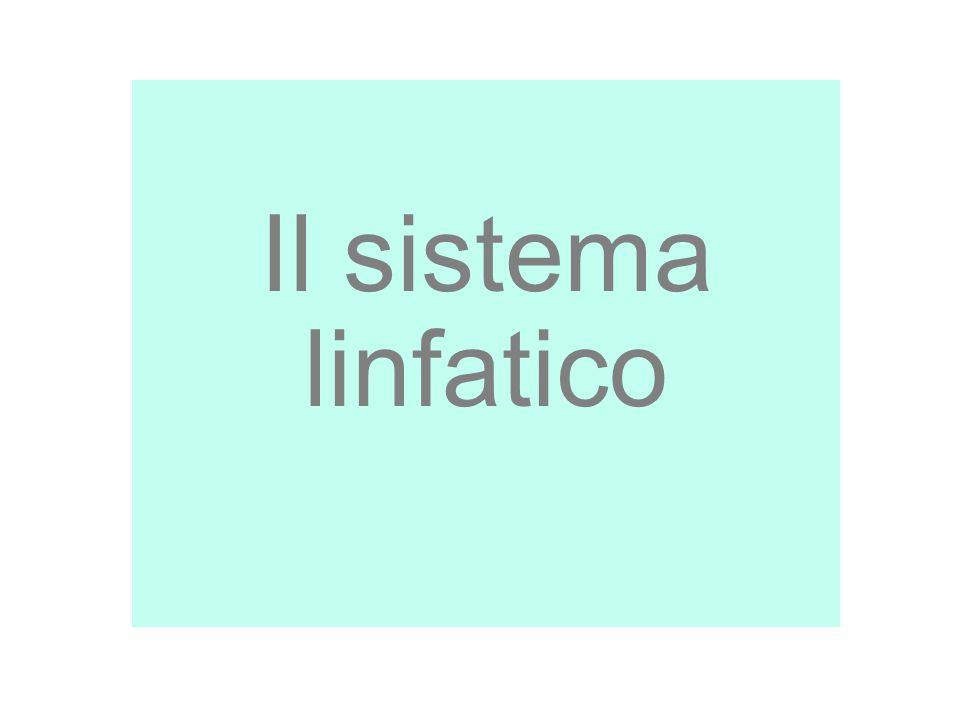 18/09/12 27/11/11 Il sistema linfatico 1 1 1
