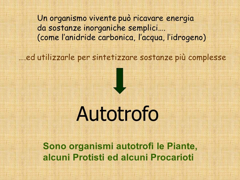 Autotrofo Sono organismi autotrofi le Piante,