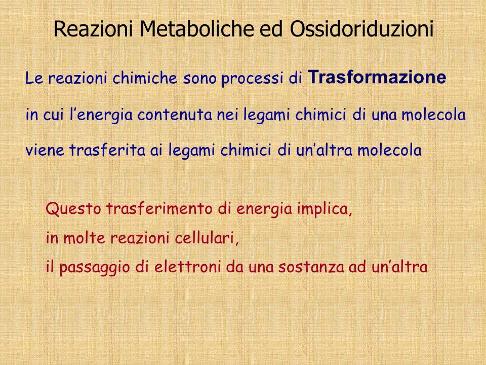 Reazioni Metaboliche ed Ossidoriduzioni