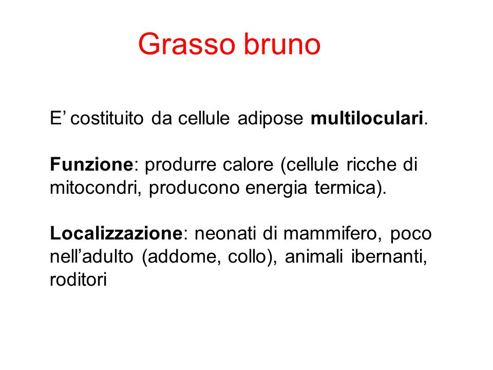 Grasso bruno E' costituito da cellule adipose multiloculari.