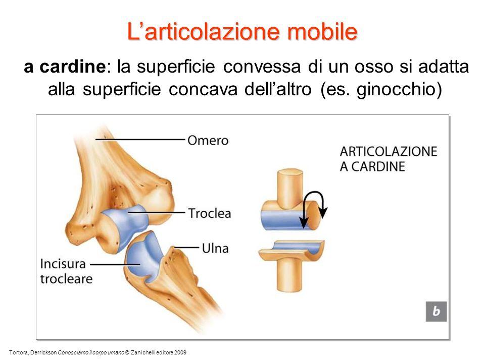 L'articolazione mobile