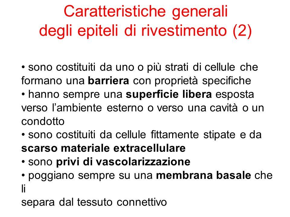 Caratteristiche generali degli epiteli di rivestimento (2)