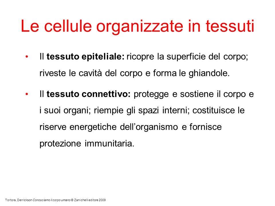 Le cellule organizzate in tessuti