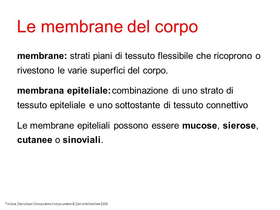 Le membrane del corpo membrane: strati piani di tessuto flessibile che ricoprono o rivestono le varie superfici del corpo.
