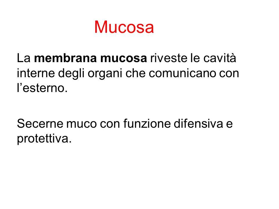 Mucosa La membrana mucosa riveste le cavità interne degli organi che comunicano con l'esterno. Secerne muco con funzione difensiva e protettiva.
