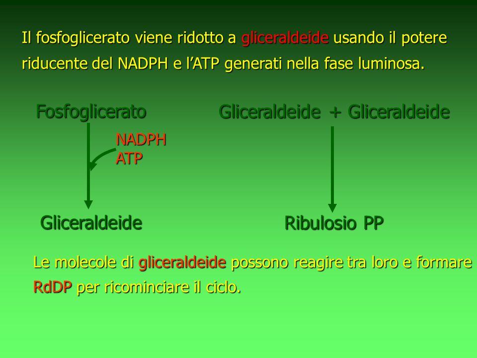 Gliceraldeide + Gliceraldeide