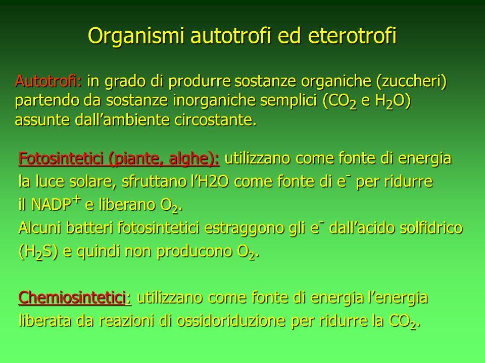 Organismi autotrofi ed eterotrofi