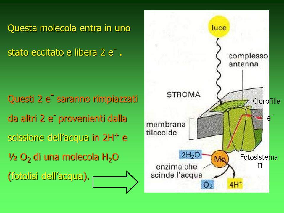 Questa molecola entra in uno stato eccitato e libera 2 e- .