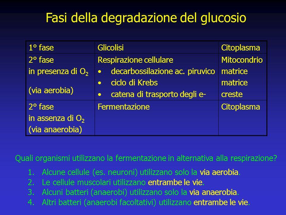 Fasi della degradazione del glucosio