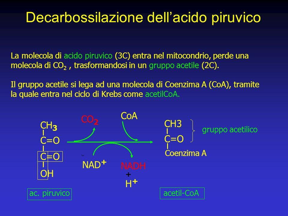 Decarbossilazione dell'acido piruvico