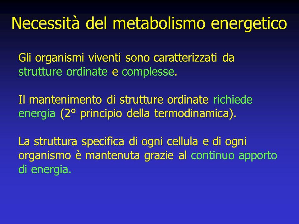 Necessità del metabolismo energetico