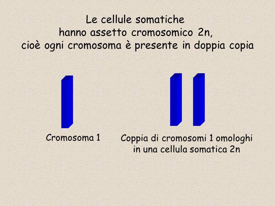 hanno assetto cromosomico 2n,