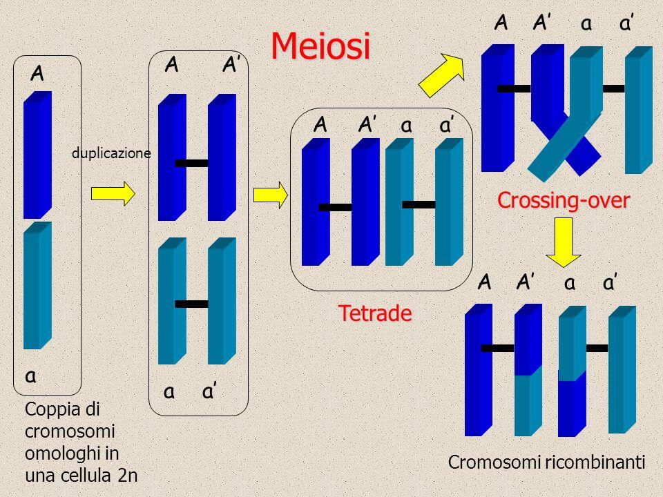 Cromosomi ricombinanti