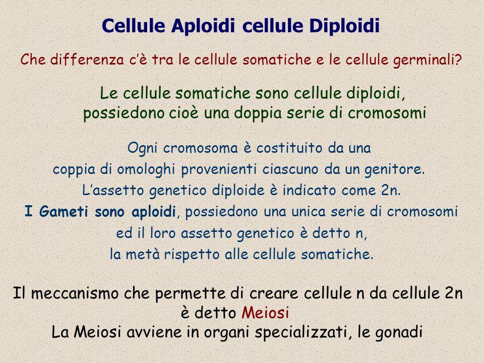 Cellule Aploidi cellule Diploidi