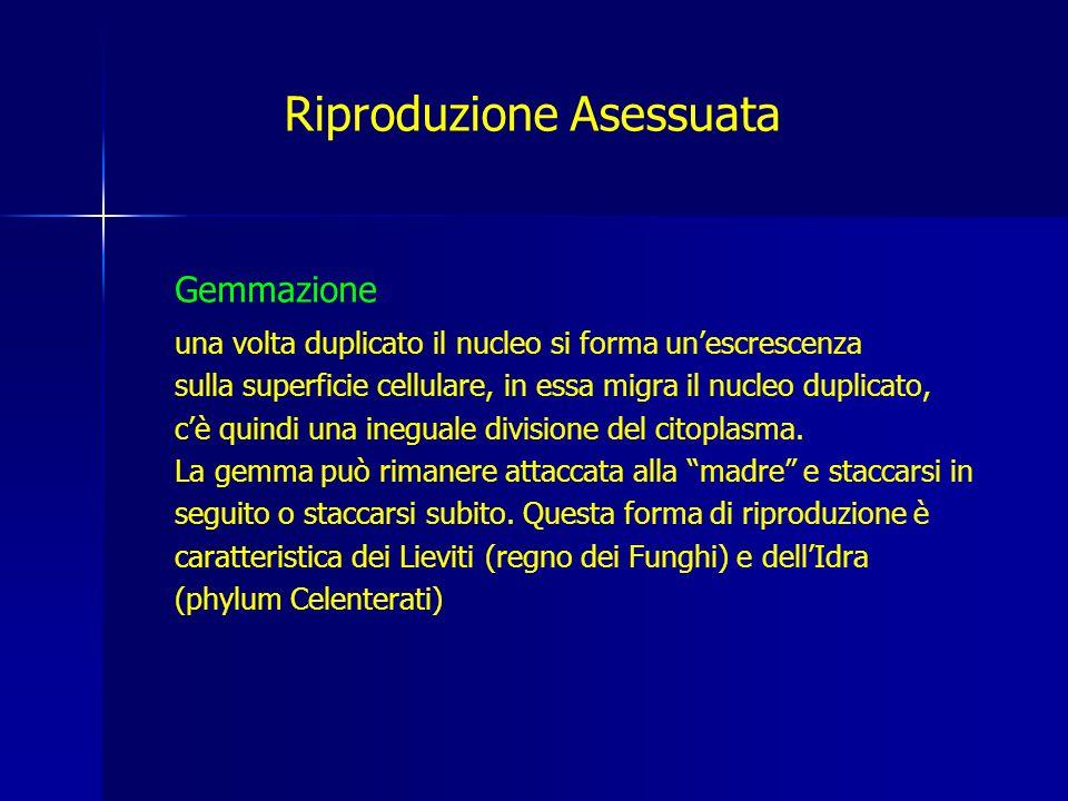 Riproduzione Asessuata