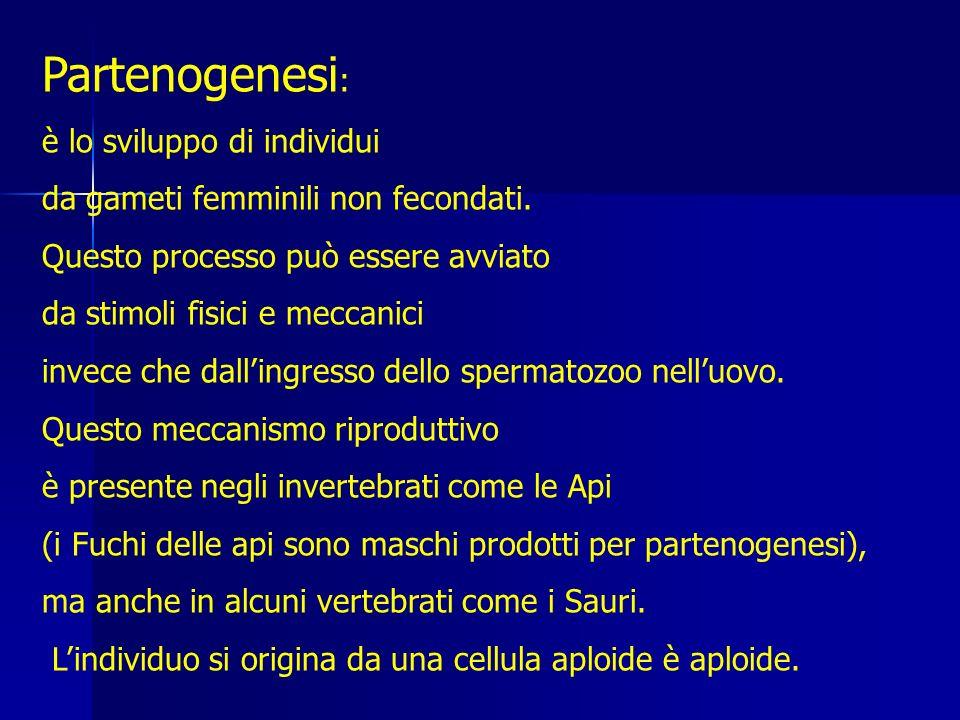 Partenogenesi: è lo sviluppo di individui