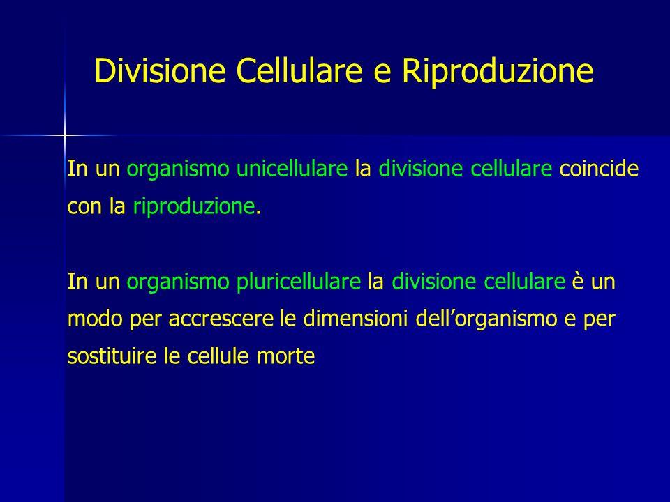 Divisione Cellulare e Riproduzione