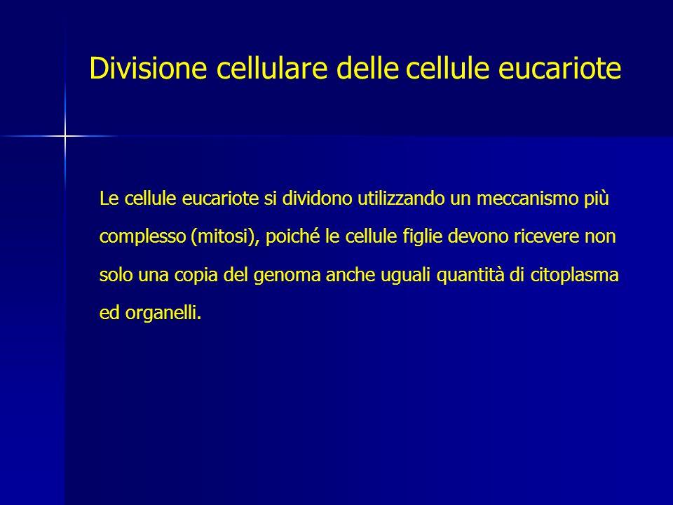 Divisione cellulare delle cellule eucariote