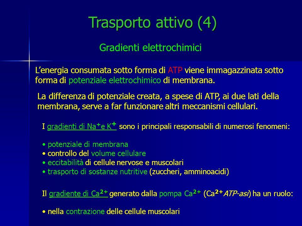 Trasporto attivo (4) Gradienti elettrochimici