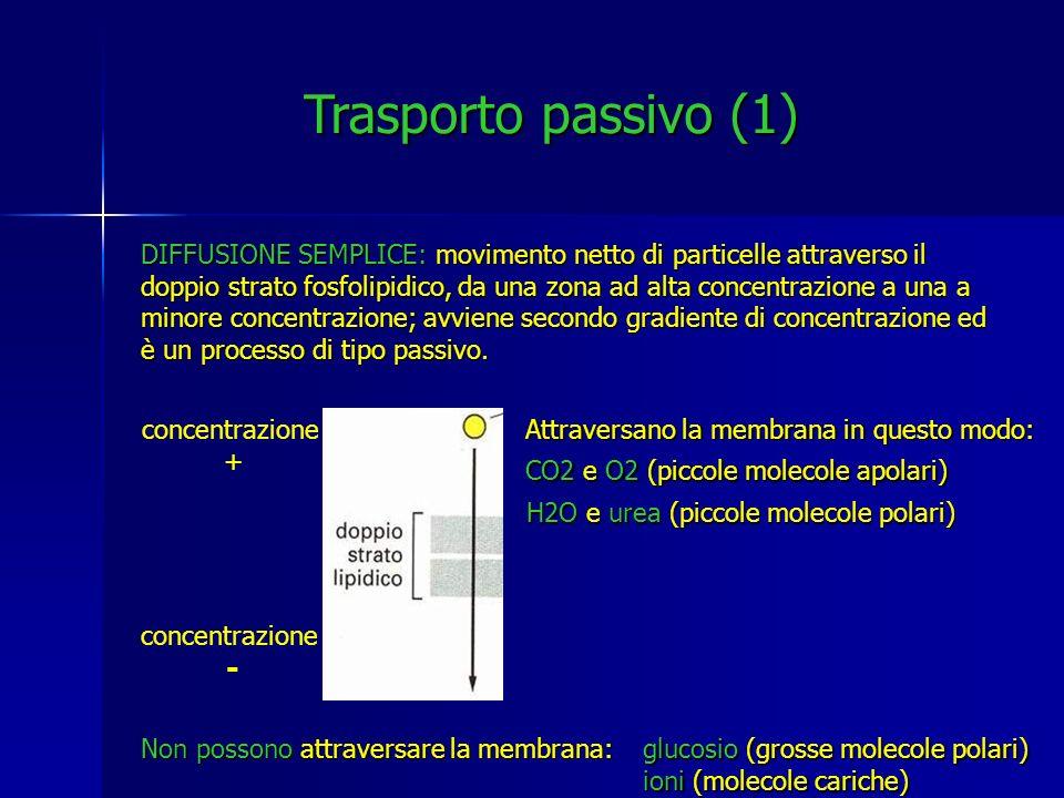 Trasporto passivo (1)