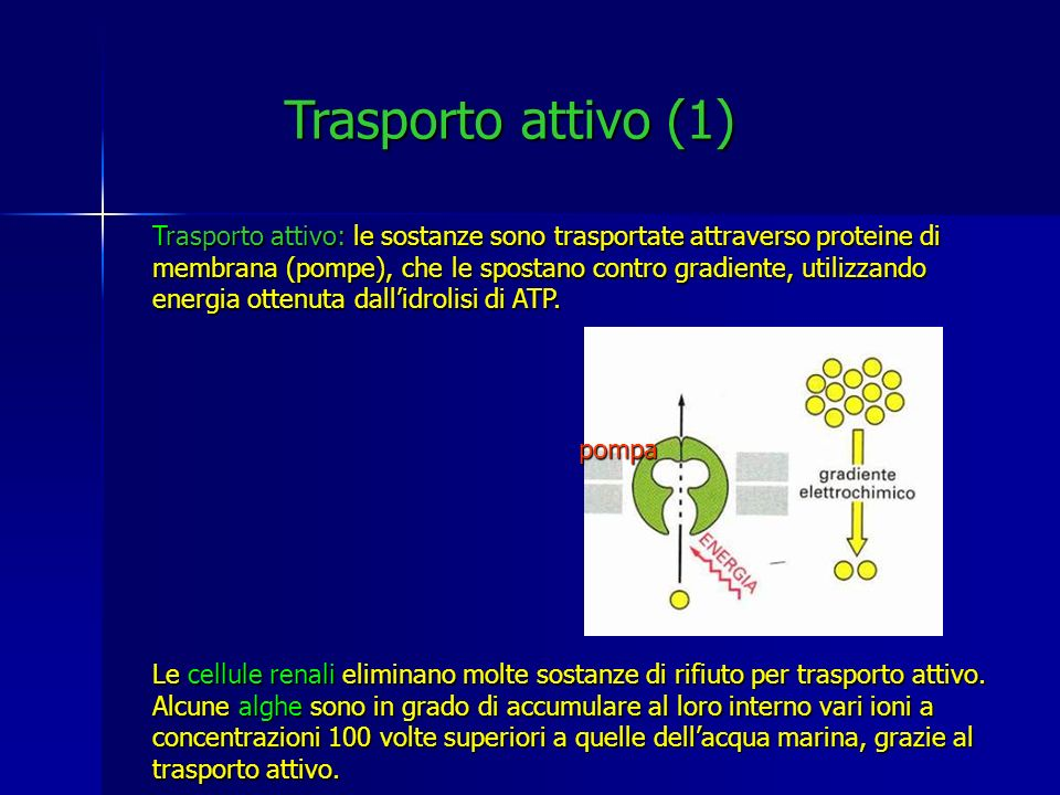 Trasporto attivo (1)