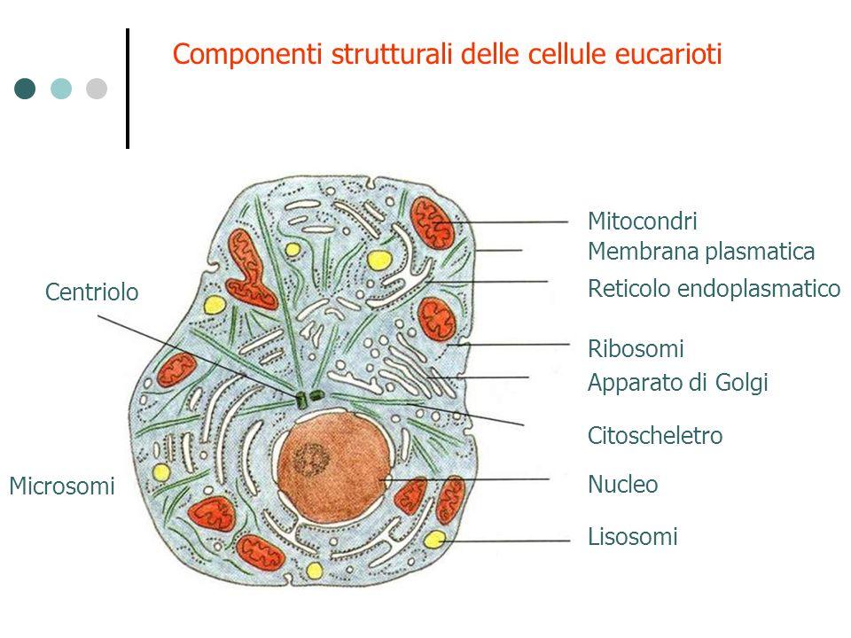 Componenti strutturali delle cellule eucarioti