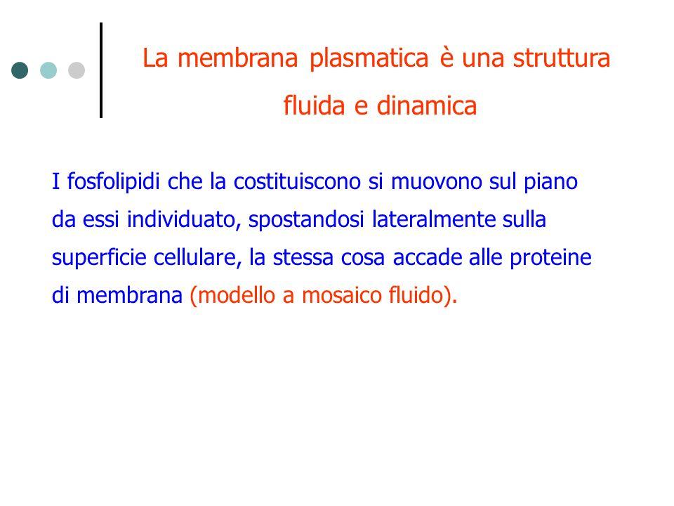La membrana plasmatica è una struttura