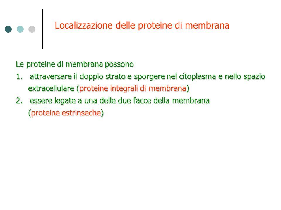 Localizzazione delle proteine di membrana