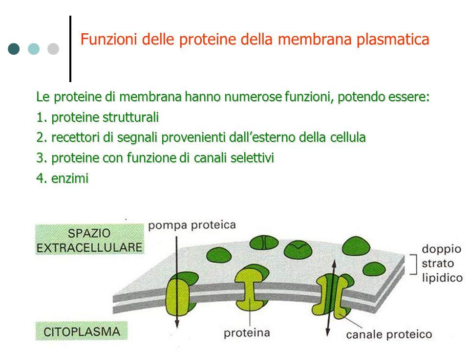 Funzioni delle proteine della membrana plasmatica