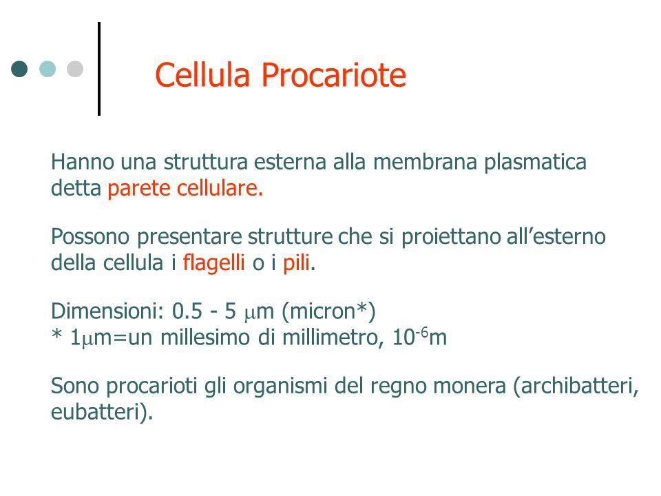 Cellula Procariote Hanno una struttura esterna alla membrana plasmatica. detta parete cellulare.