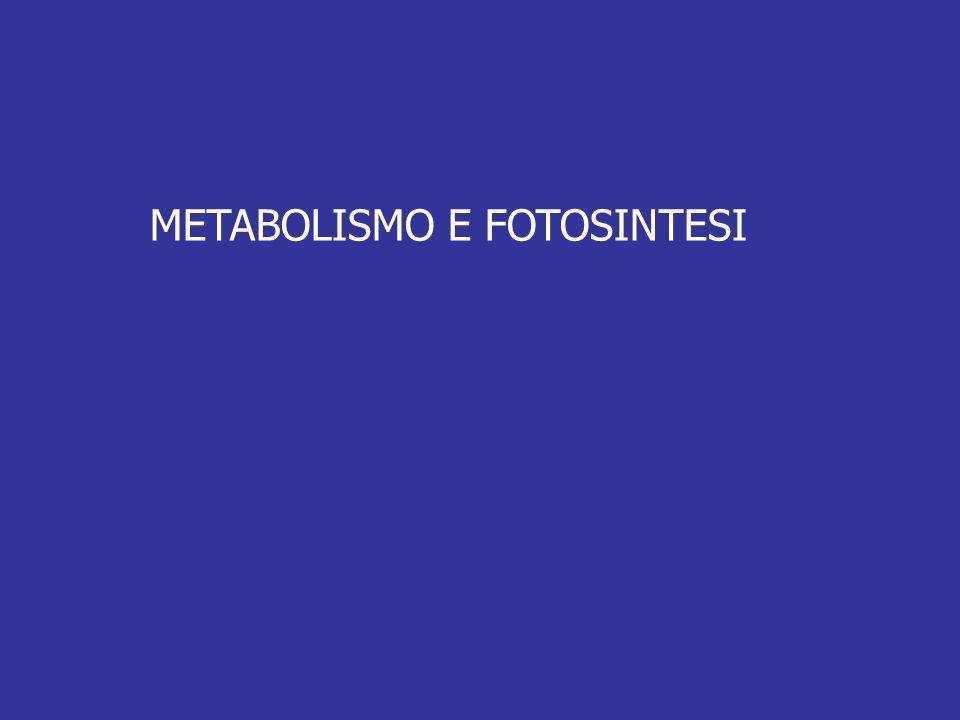 METABOLISMO E FOTOSINTESI