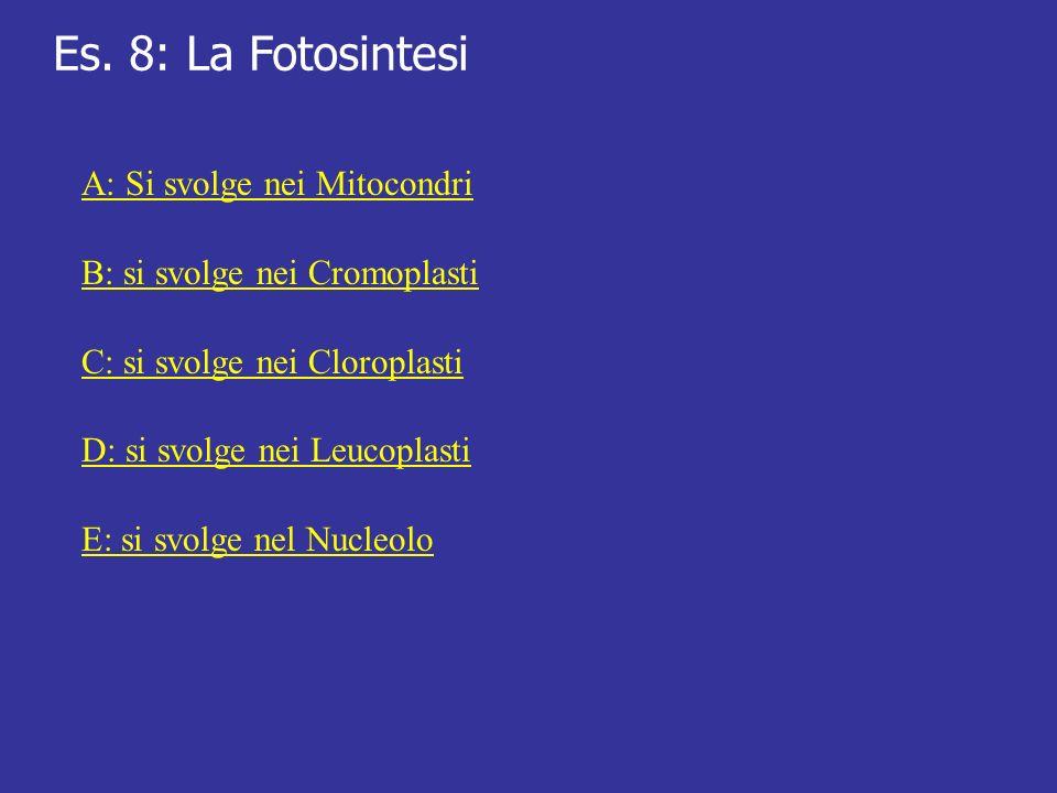 Es. 8: La Fotosintesi A: Si svolge nei Mitocondri