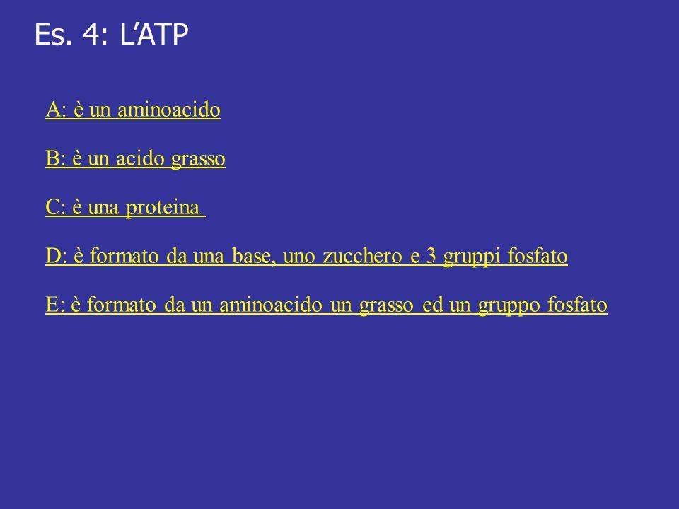 Es. 4: L'ATP A: è un aminoacido B: è un acido grasso C: è una proteina