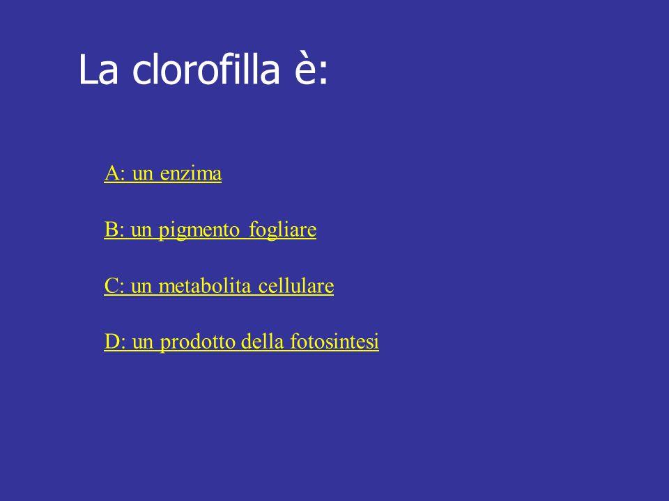 La clorofilla è: A: un enzima B: un pigmento fogliare