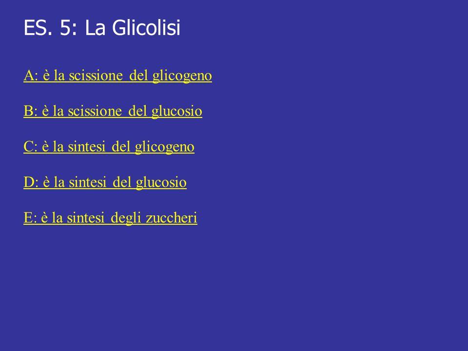 ES. 5: La Glicolisi A: è la scissione del glicogeno