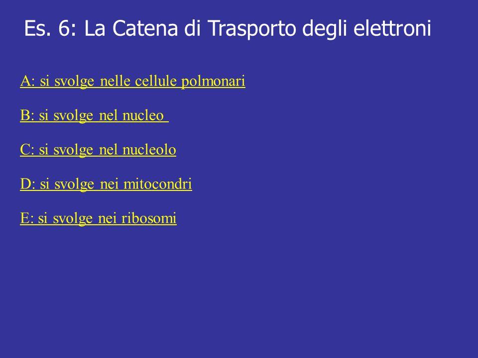 Es. 6: La Catena di Trasporto degli elettroni